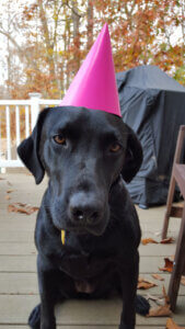 Delilah with Birthday hat